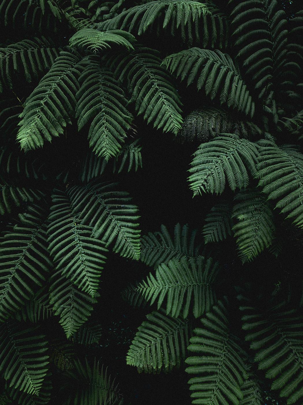 darkgreenheart_nicowitwicki